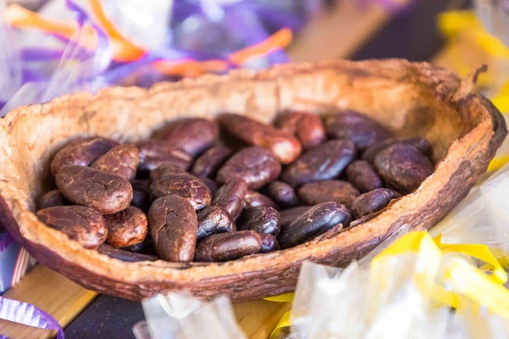 Kakao Bohnen in Oaxaca