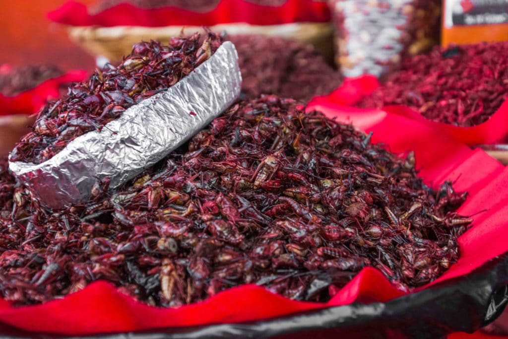 Chapulines sind typisches Essen Oaxaca